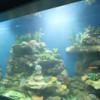 Foam for Aquarium Background