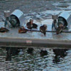 EPS Blocks used for Floatation in Commercial Pond Aeration