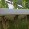 EPS foam panel used to create aquaponic garden