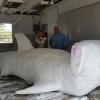 Giant Sculpting Foam Blocks