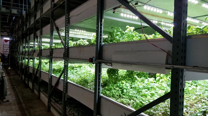 Commercial Hydroponic Farm Grow Trays