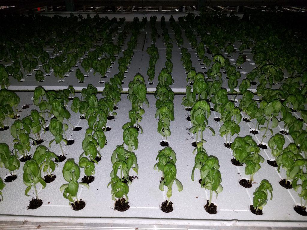 Commercial Hydroponic Farm Grow Trays Universal Foam