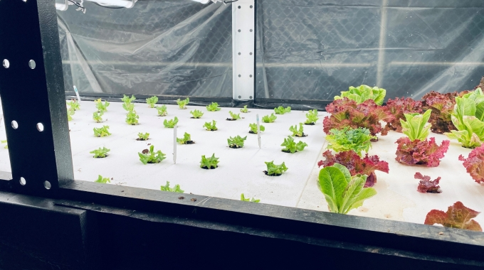 EPS Foam Trays for Hydroponic and Aquaponic Gardening