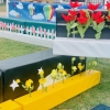 Jumps and Displays at Horse Jumping Competition